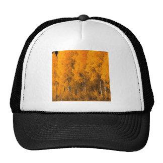 Autumn Aspen Trees Montana Mesh Hat
