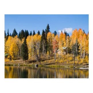 Autumn Aspens at Glacier Springs Postcard