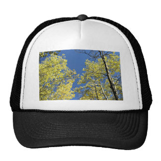 Autumn Aspens Cap