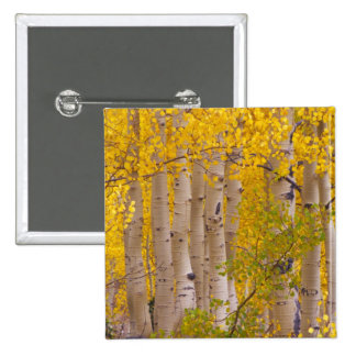 Autumn aspens in Kebler Pass in Colorado. 15 Cm Square Badge