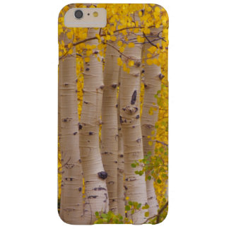 Autumn aspens in Kebler Pass in Colorado Barely There iPhone 6 Plus Case
