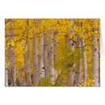 Autumn aspens in Kebler Pass in Colorado. Greeting Card