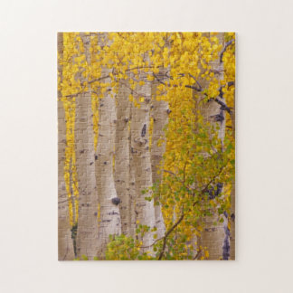 Autumn aspens in Kebler Pass in Colorado Jigsaw Puzzle