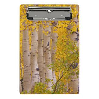 Autumn aspens in Kebler Pass in Colorado Mini Clipboard