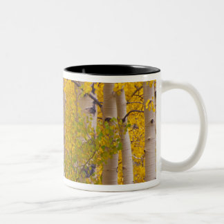 Autumn aspens in Kebler Pass in Colorado. Two-Tone Coffee Mug