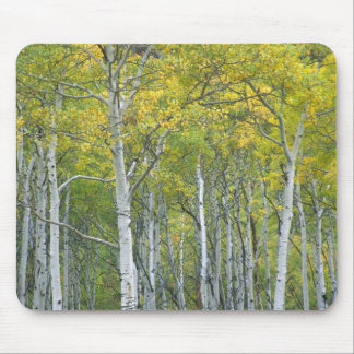 Autumn aspens in McClure pass in Colorado. Mouse Mat