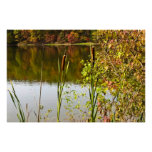 Autumn at Pond Poster