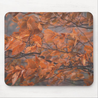 Autumn Beauty Mouse Mat