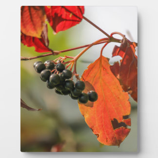 autumn berries plaque