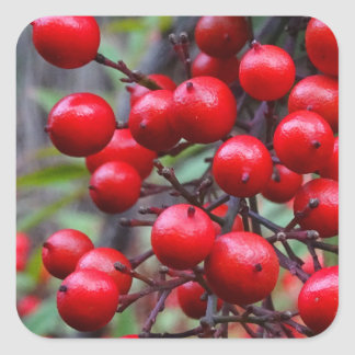Autumn Berries Square Sticker