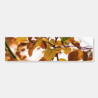Autumn Burst Bumper Sticker