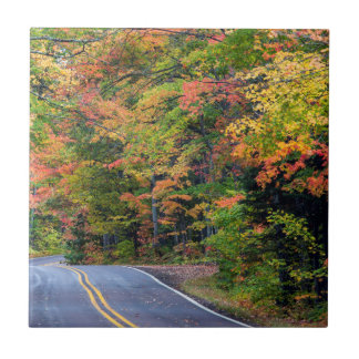 Autumn Canopy Of Color Along Highway 41 2 Tile