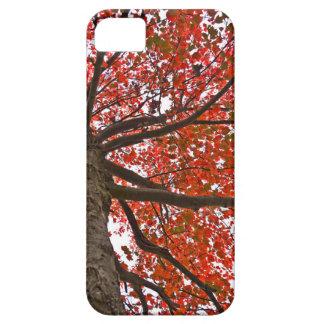 Autumn Case iPhone 5 Cases