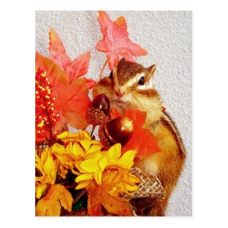 Autumn , chipmunk ,squirrel (photo) postcard