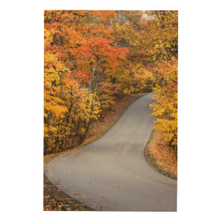Autumn Color At Brown County State Park Wood Print