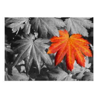 Autumn Color Fine Art Print