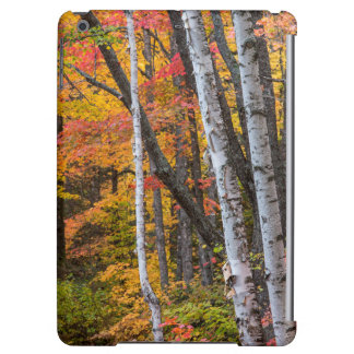 Autumn Color In The Forest Near Copper Harbor