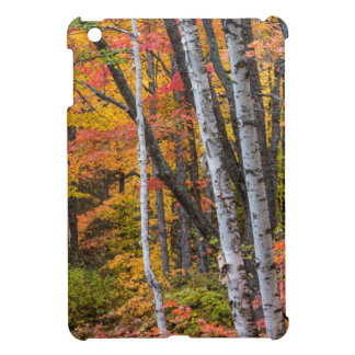 Autumn Color In The Forest Near Copper Harbor iPad Mini Cover