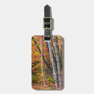 Autumn Color In The Forest Near Copper Harbor Luggage Tag