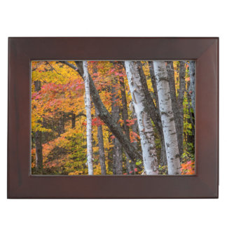 Autumn Color In The Forest Near Copper Harbor Memory Boxes
