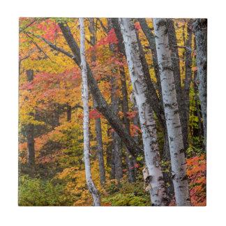 Autumn Color In The Forest Near Copper Harbor Small Square Tile