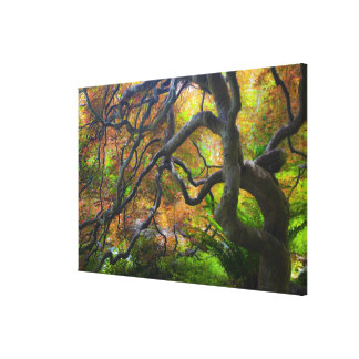 Autumn color Maple trees, Victoria, British 2 Canvas Print