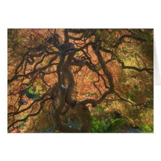 Autumn color Maple trees, Victoria, British 2 Card