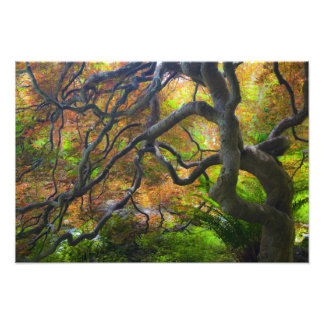 Autumn color Maple trees, Victoria, British 2 Photo Print