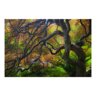 Autumn color Maple trees, Victoria, British 2 Poster