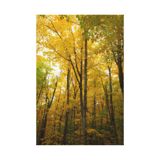 Autumn color, Michigan Canvas Print