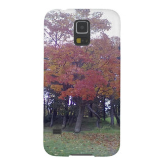 Autumn colored Tree Galaxy S5 Cases