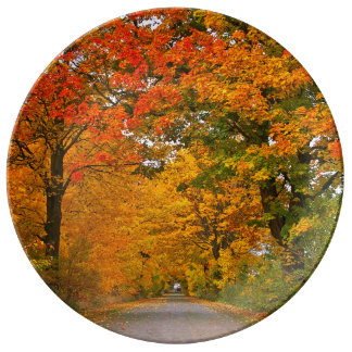 Autumn colorful plate