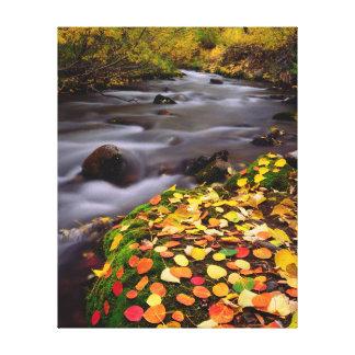 Autumn Colors along McGee Creek Gallery Wrap Canvas