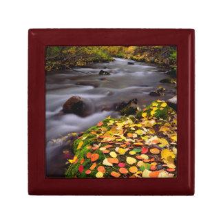 Autumn Colors along McGee Creek Gift Box