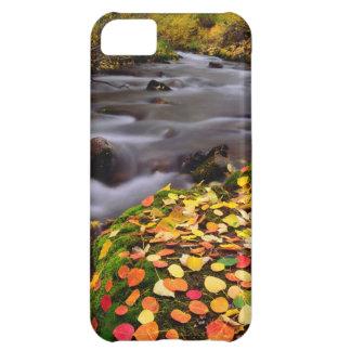 Autumn Colors along McGee Creek iPhone 5C Case