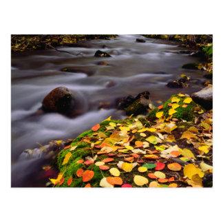 Autumn Colors along McGee Creek Postcard