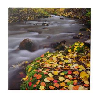 Autumn Colors along McGee Creek Small Square Tile