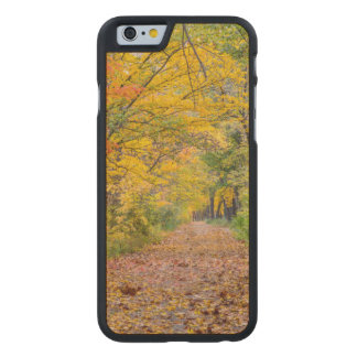 Autumn Colors At Independence State Park Carved Maple iPhone 6 Case