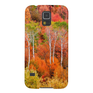 Autumn Colors In Rocky Mountains, Wyoming, USA Cases For Galaxy S5