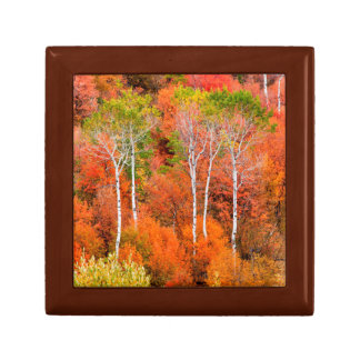 Autumn Colors In Rocky Mountains, Wyoming, USA Gift Box