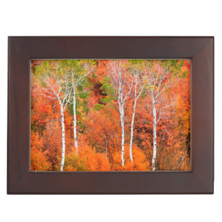 Autumn Colors In Rocky Mountains, Wyoming, USA Memory Box