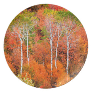 Autumn Colors In Rocky Mountains, Wyoming, USA Plate