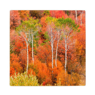 Autumn Colors In Rocky Mountains, Wyoming, USA Wood Coaster