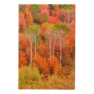 Autumn Colors In Rocky Mountains, Wyoming, USA Wood Wall Art