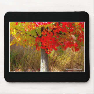 Autumn Colors Mouse Pad By Thomas Minutolo