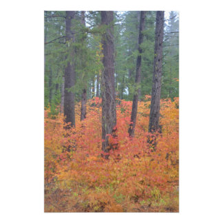Autumn colors of forests in The Cascade 3 Photo Print