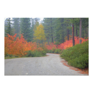 Autumn colors of forests in The Cascade Photo Print