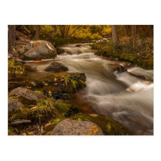 Autumn colors on Crestone Creek Postcard