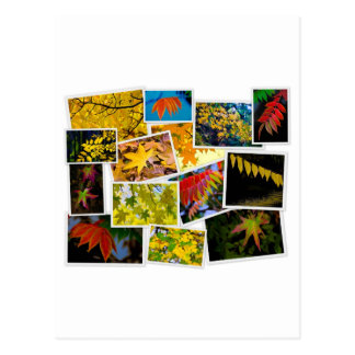 autumn colors postcard
