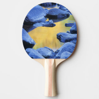Autumn colors reflected in a wading pool, ping pong paddle